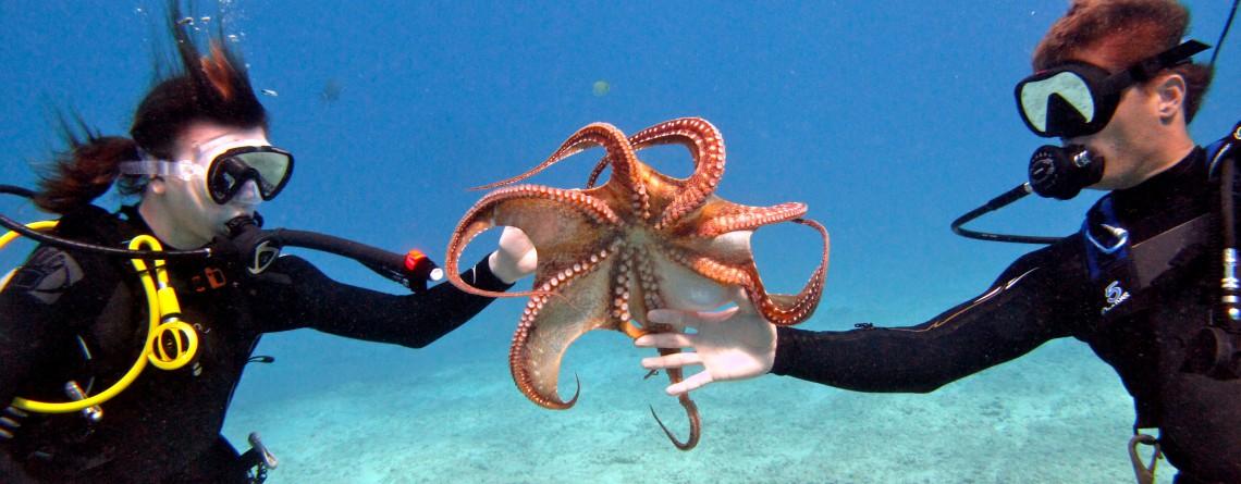 Living Oceans Scuba