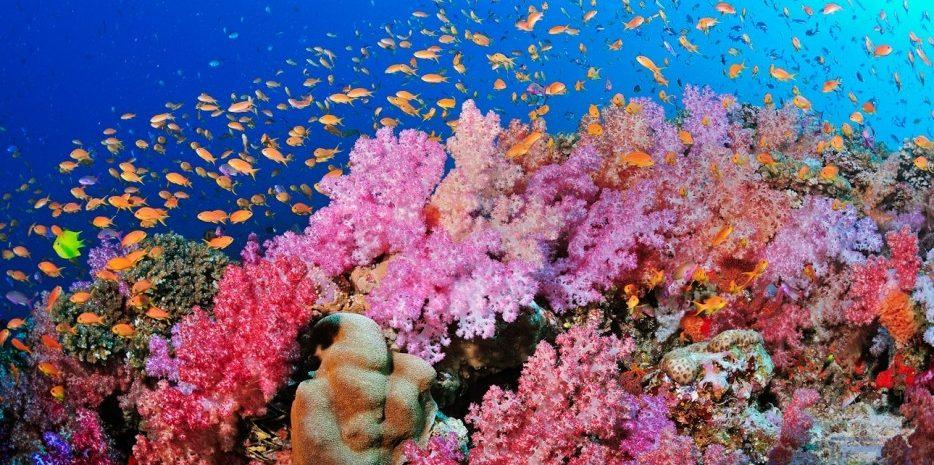 Waikiki Dive Centre