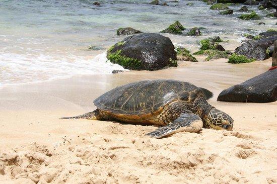 Turtle Bay Beach 3 Adventugo