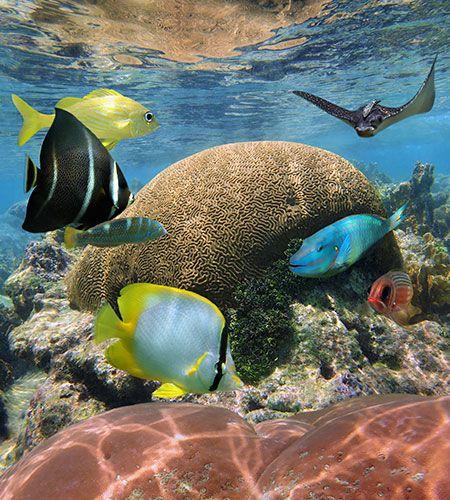 Bucco Reef Trinidad Adventugo.com