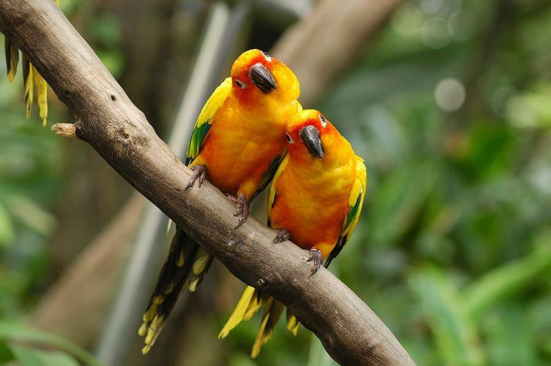 Trinidad Bird Sanctuary Adventugo.com