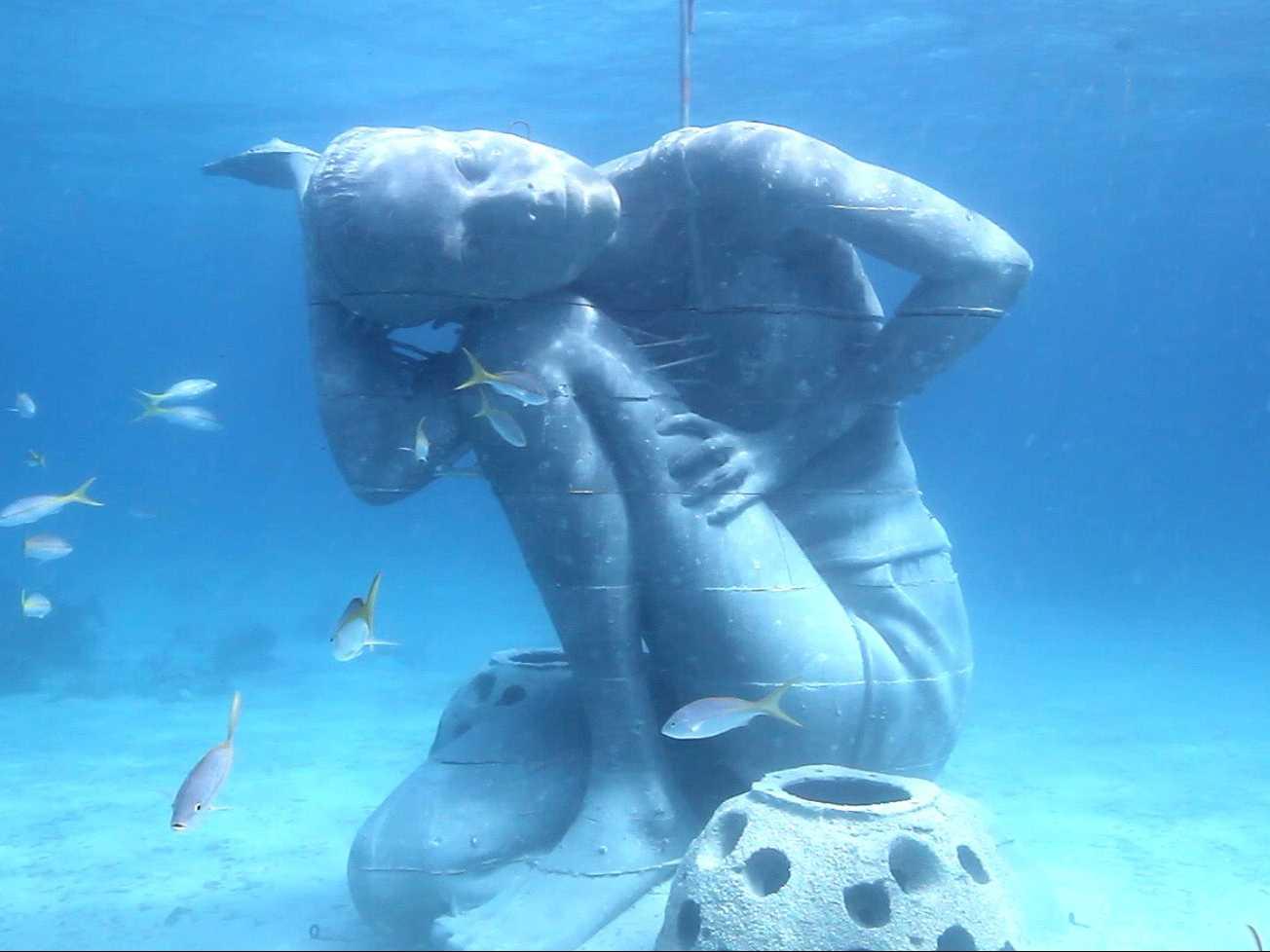 Dolphin Swim Adventugo.com