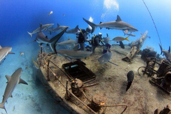 Andros Barrier Reef Bahamas Adventugo.com