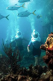 Coral World