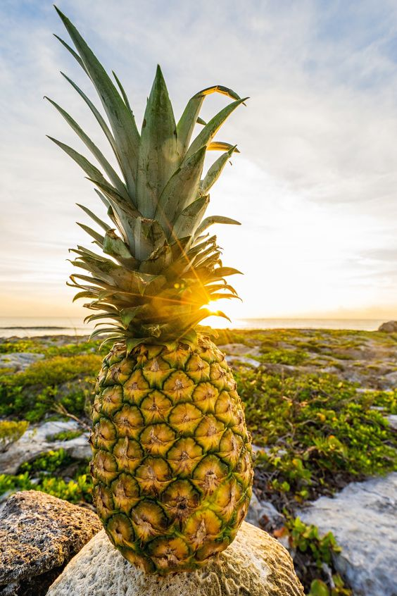 Epic pineapple pic