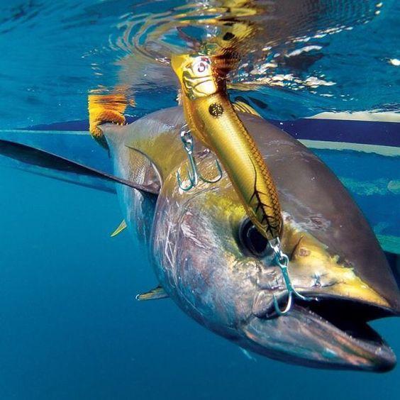Big Island Deep Sea Fishing