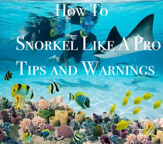 How to Snorkel Like a Pro