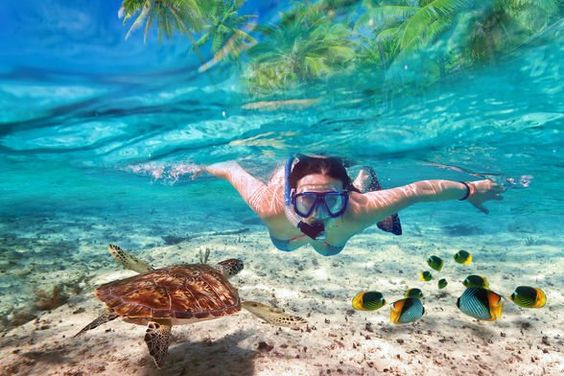 How to Snorkel for beginners
