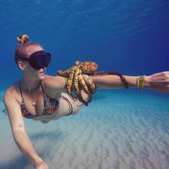 Things to see when you Snorkel