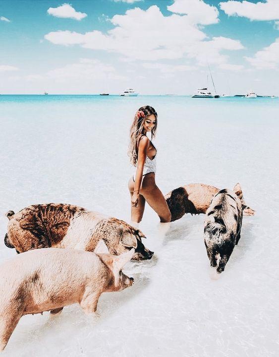 Bahamas-Pigs
