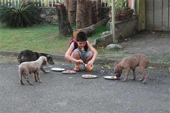 Feeding-Stray-Dogs