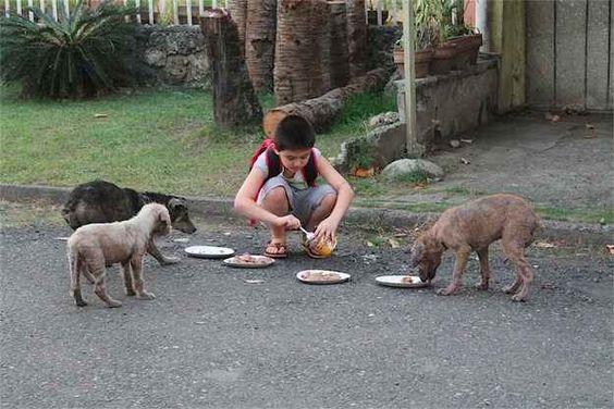 Feeding-Stray-Dogs