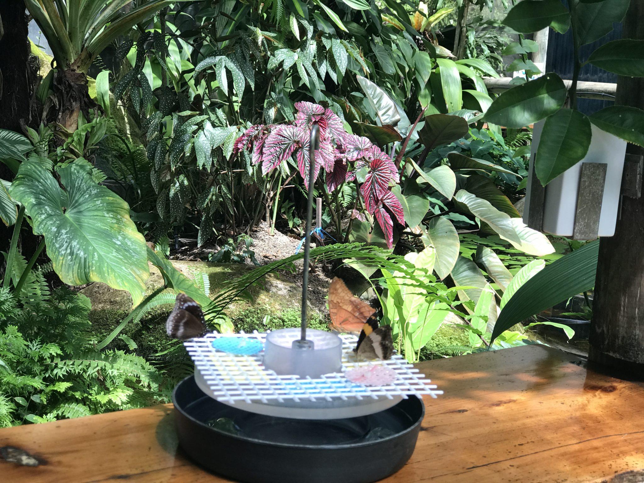 Australian-butterfly-sanctuary-kuranda