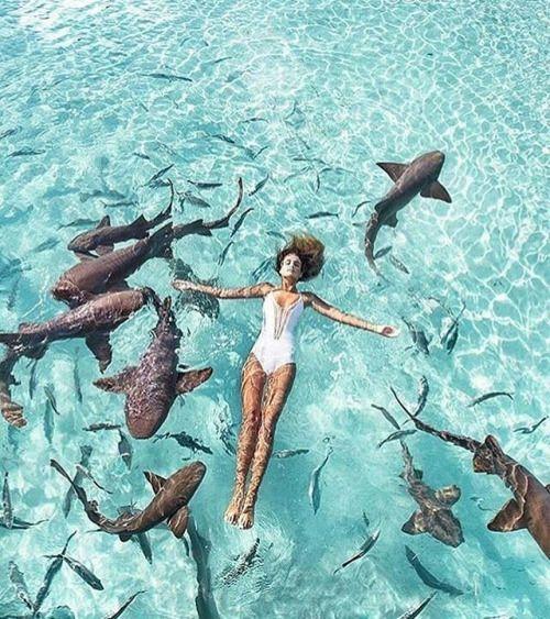 Shark-Swim-Bahamas