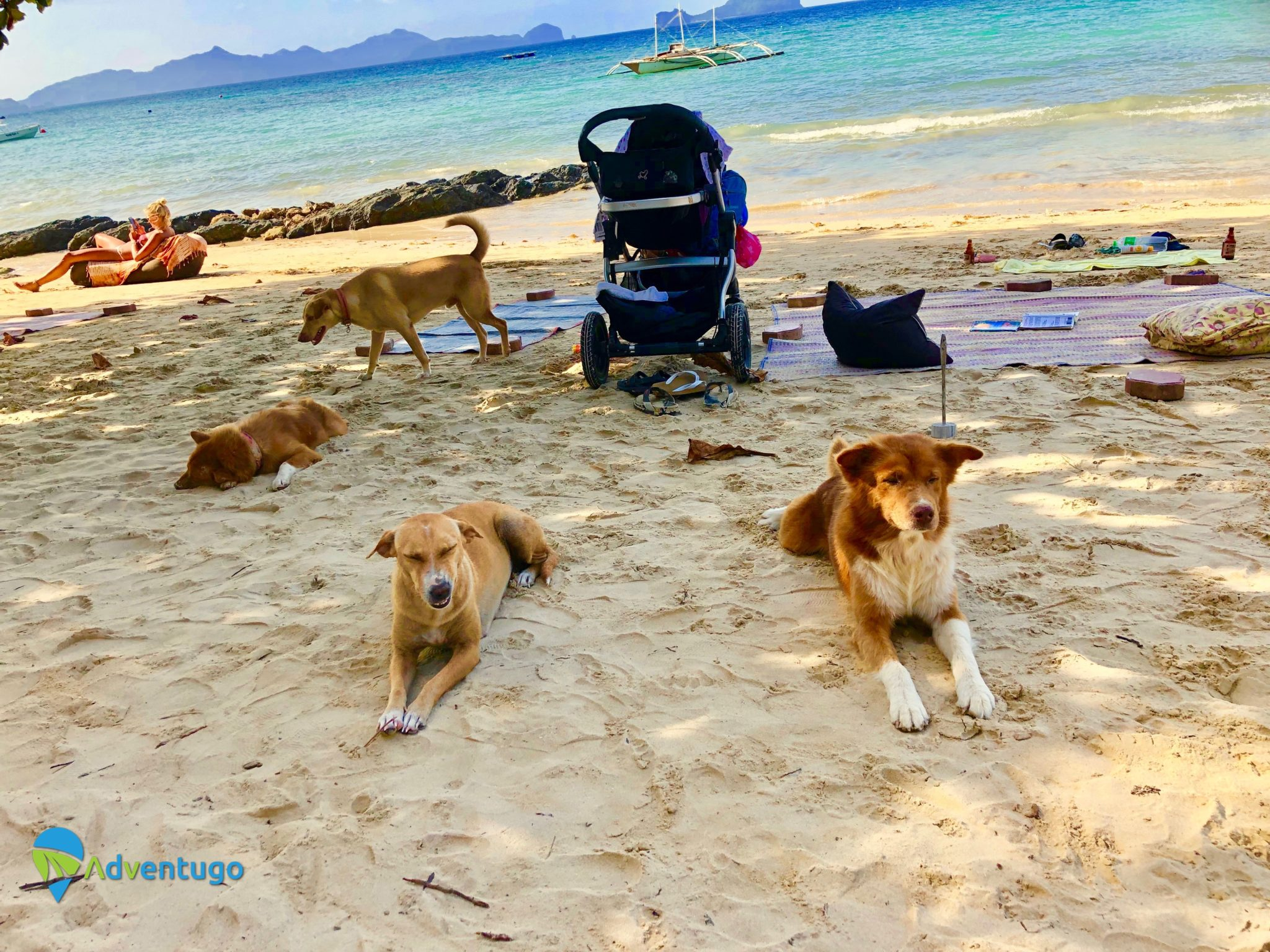 Stray Dogs On The Beach Lio Beach El Nido