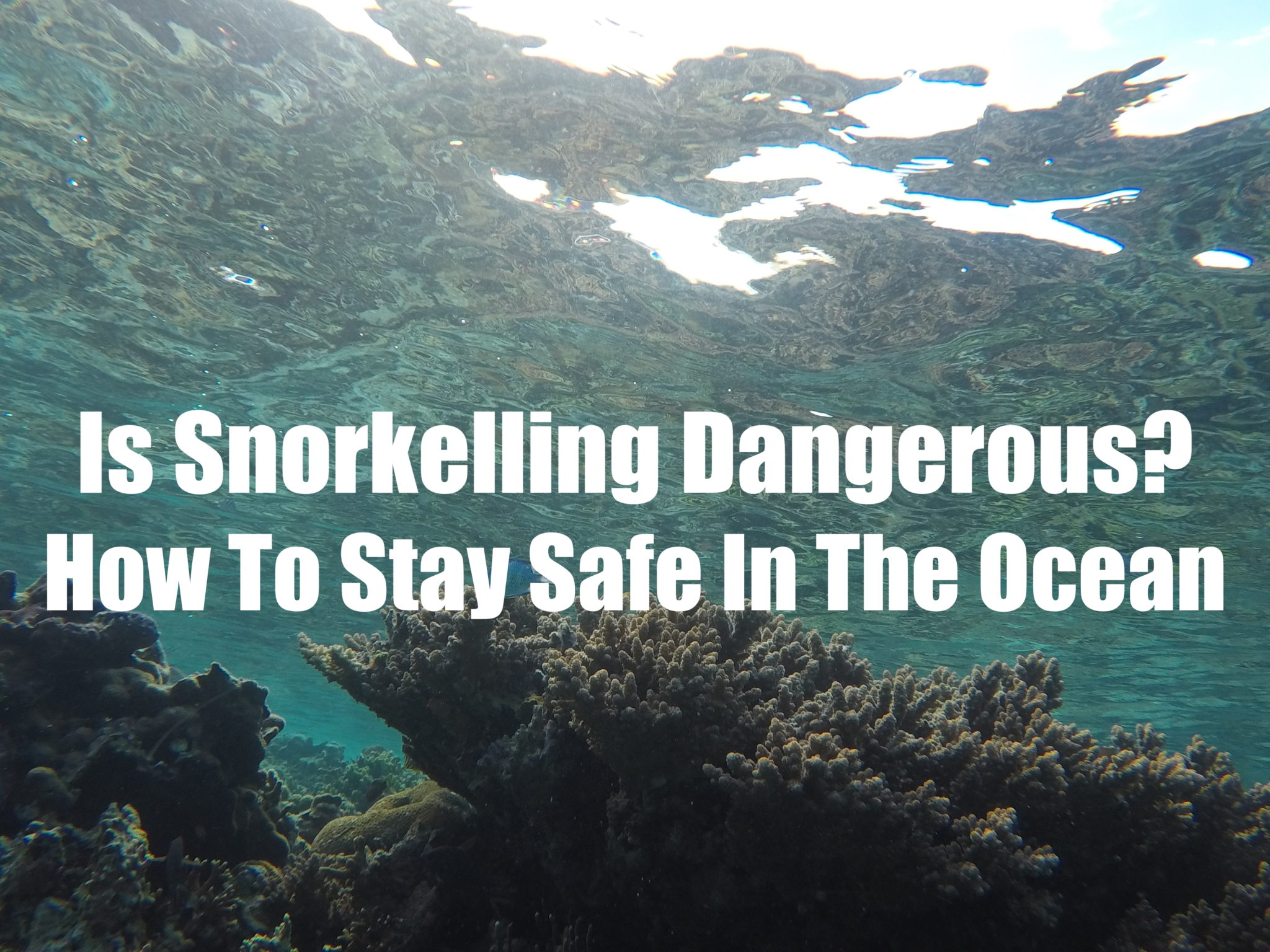 Is Snorkelling Dangerous? How to stay safe in the ocean