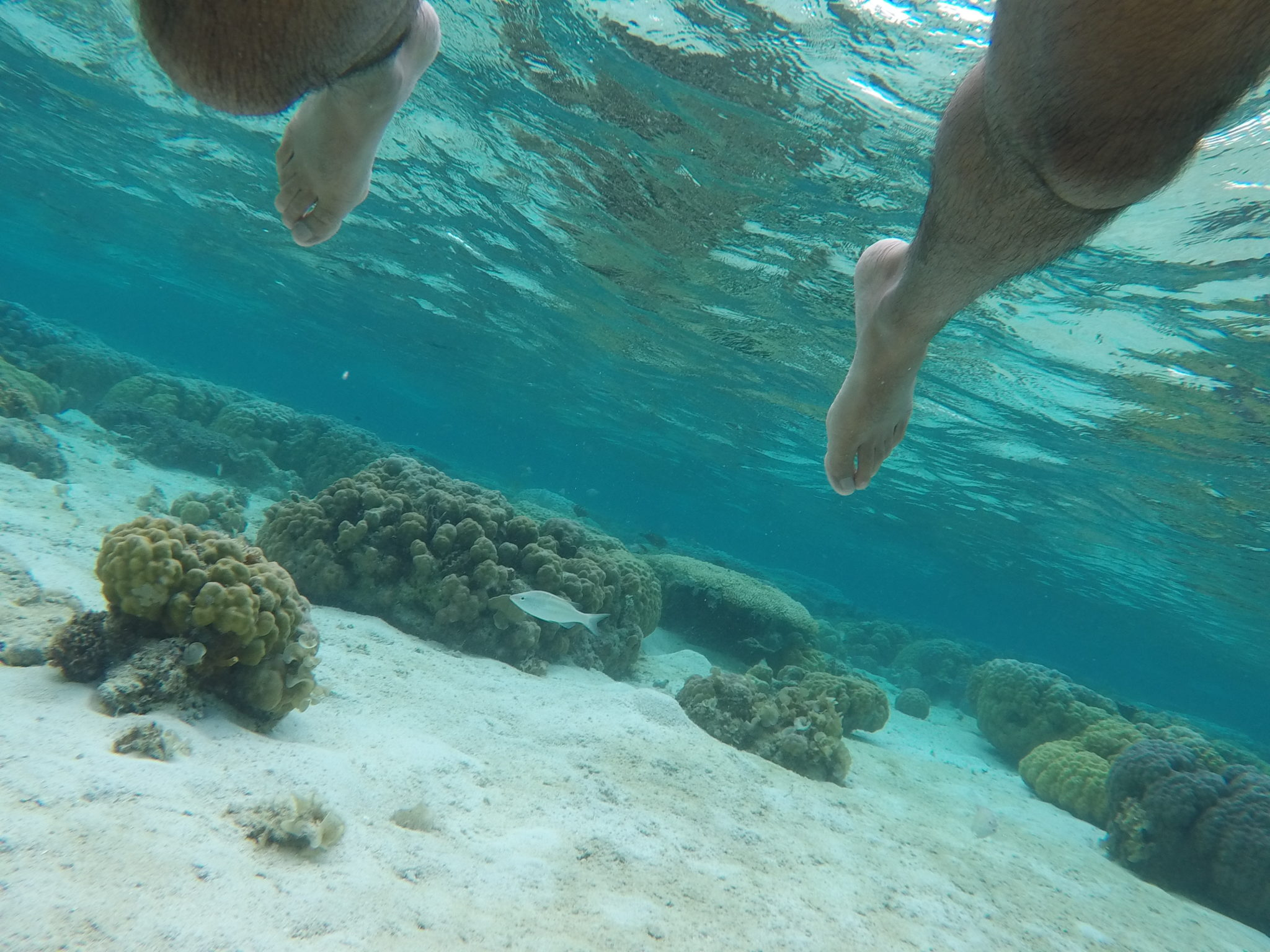 Is snorkelling dangerous?